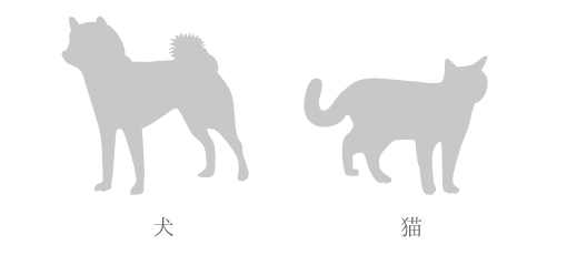 dogcat02